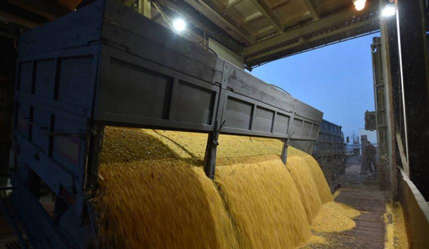 Prețurile la cereale la Marea Neagră se mențin ridicate